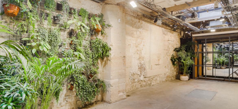3 Espace Cinko mur végétal sous verrière